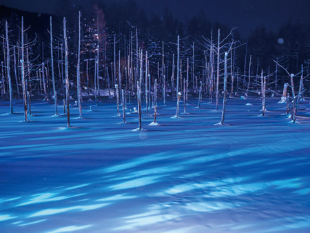 Asahiyama Zoo in winter and Light-up Blue Pond & Shirahige Waterfalls